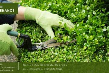 Garden care ดูแลสวนรายเดือน แบบ Premium